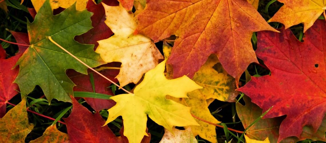 otoño-38